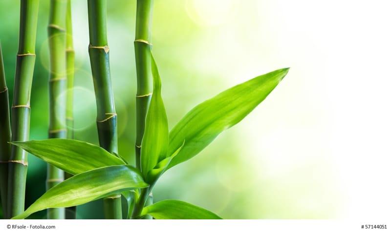 Bambus als Symbol für Resilienz